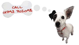 Caroles Pet Sitting Services - logo